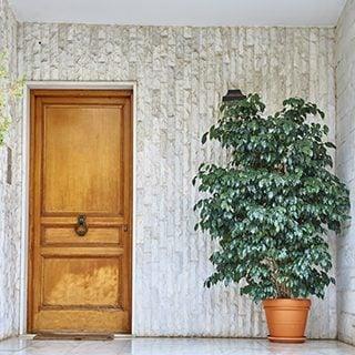 観葉植物 玄関