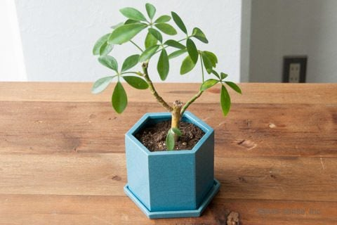 オリジナル 植木鉢 ハサミ ハニカムポット