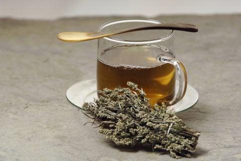 ヨモギ1 お茶