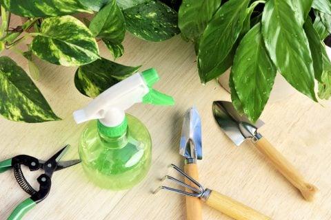 観葉植物 ポトス 剪定ばさみ ハサミ スコップ 霧吹き メンテナンス 植え替え