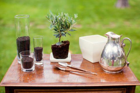 オリーブ 観葉植物 植え替え