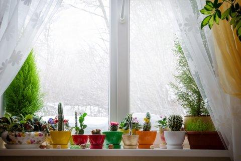 窓 観葉植物 多肉植物 カーテン 冬