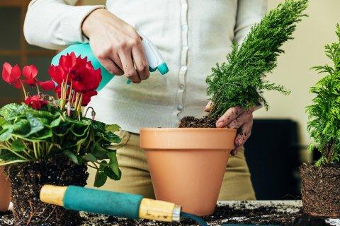 植え替え 鉢 植物 水や