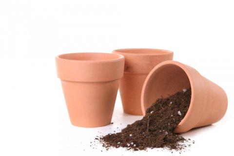 植え替え 鉢 土