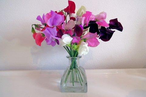 スイートピーの花言葉とは?色や種類は?開花時期と見頃の季節は ...