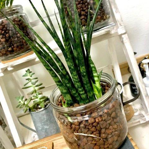 ハイドロカルチャーとは観葉植物を育てる時の水やりや植え替え