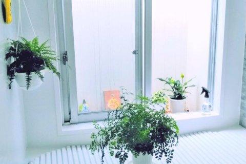 肥料 観葉 植物