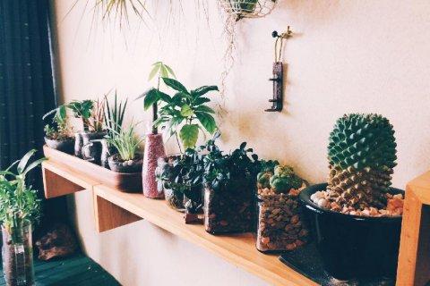 風水に良い観葉植物の種類!玄関、リビング、トイレ、寝室で ...