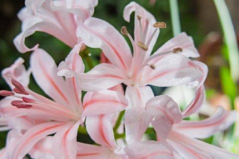 まで 咲く 春 から 花 秋 花壇を彩る花!春・夏・秋・冬に植える花おすすめ10選