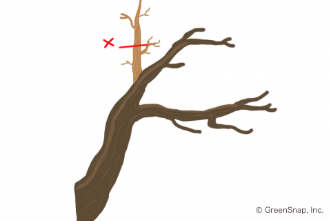剪定 金木犀