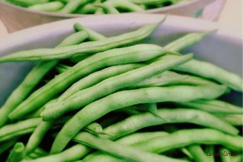 インゲン インゲン豆 収穫