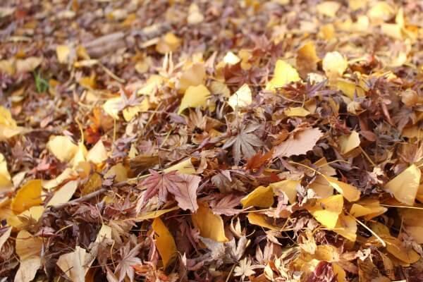 落ち葉 堆肥