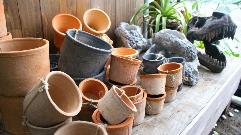 鉢植え 鉢