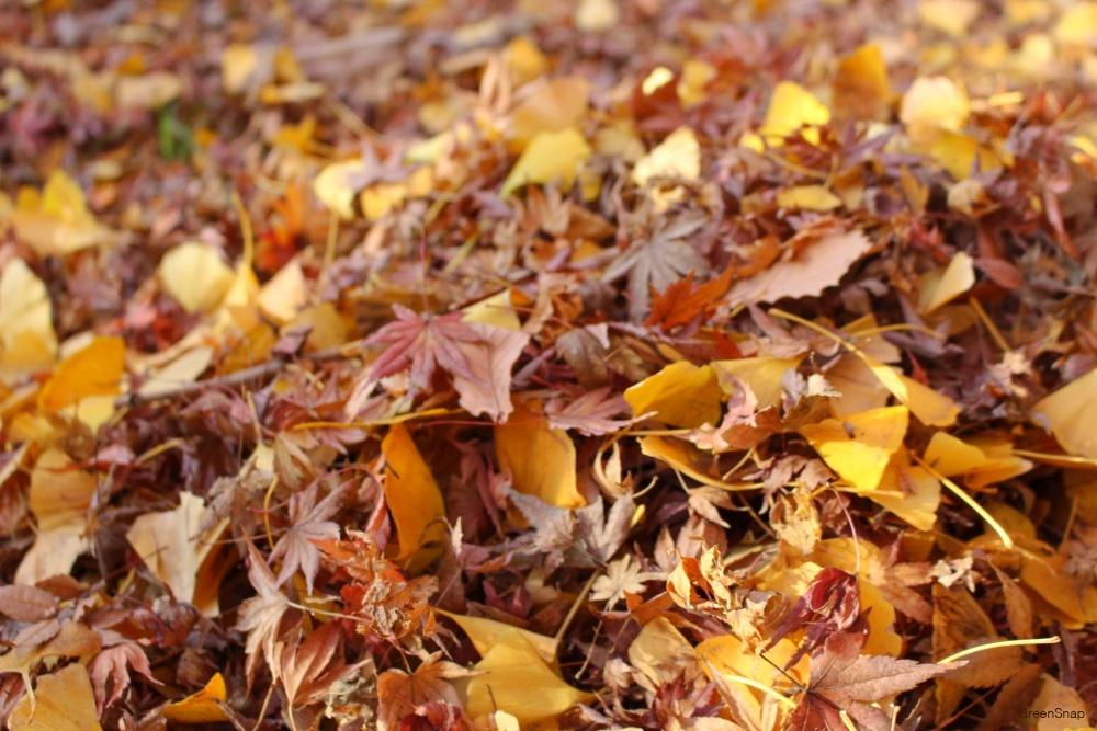 落ち葉 枯葉 腐葉土