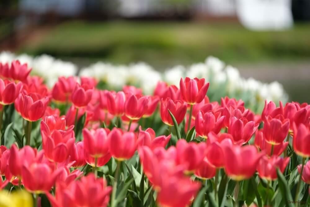 春に咲く花21選まとめ3月4月5月に咲く美しい春の花の特徴などをご