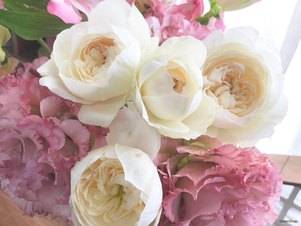 バラ 薔薇 花