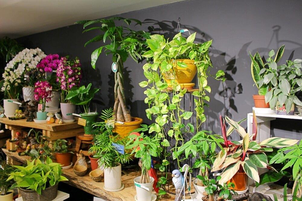 ヴェルデステ 園芸店 ガーデニングショップ 観葉植物 鉢
