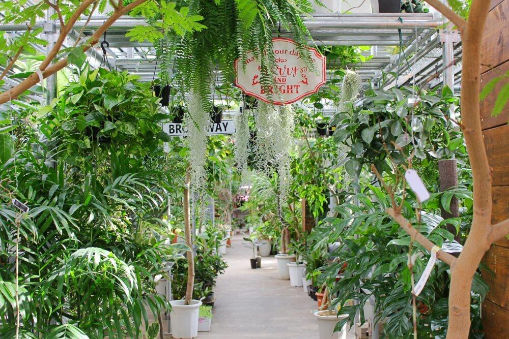 オザキフラワーパーク 園芸店 ガーデニングショップ 観葉植物