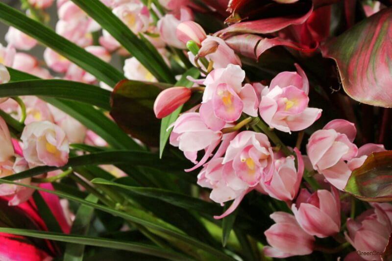 ピンク色 シンビジウム シンビジューム