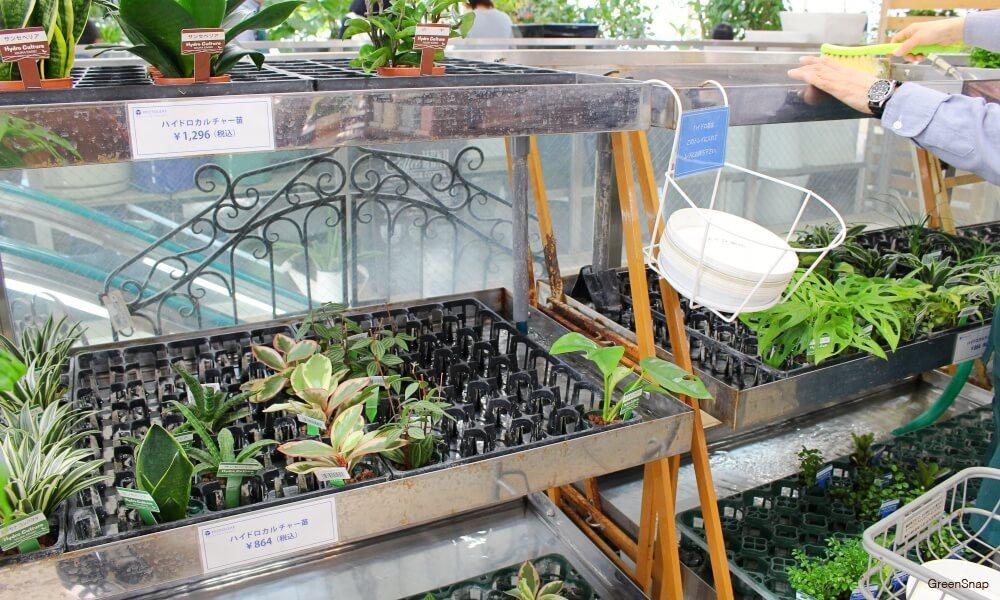 二子玉川にあるガーニング•園芸店「プロトリーフ ガーデンアイランド玉川店」の店内の画像