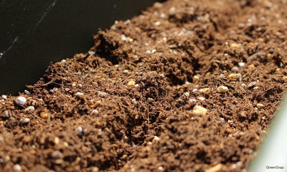プランターの土に、種まき用の縦一直線に溝を作った画像