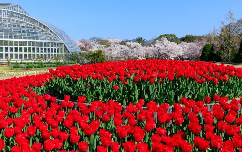 京都府立植物園に咲いている植物