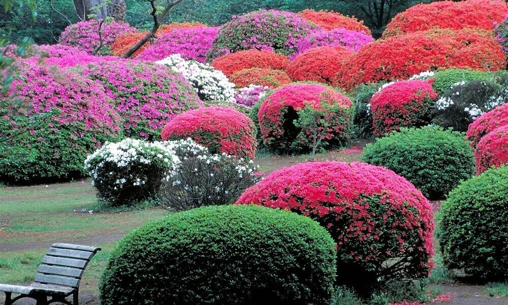 新宿御苑に咲いている植物