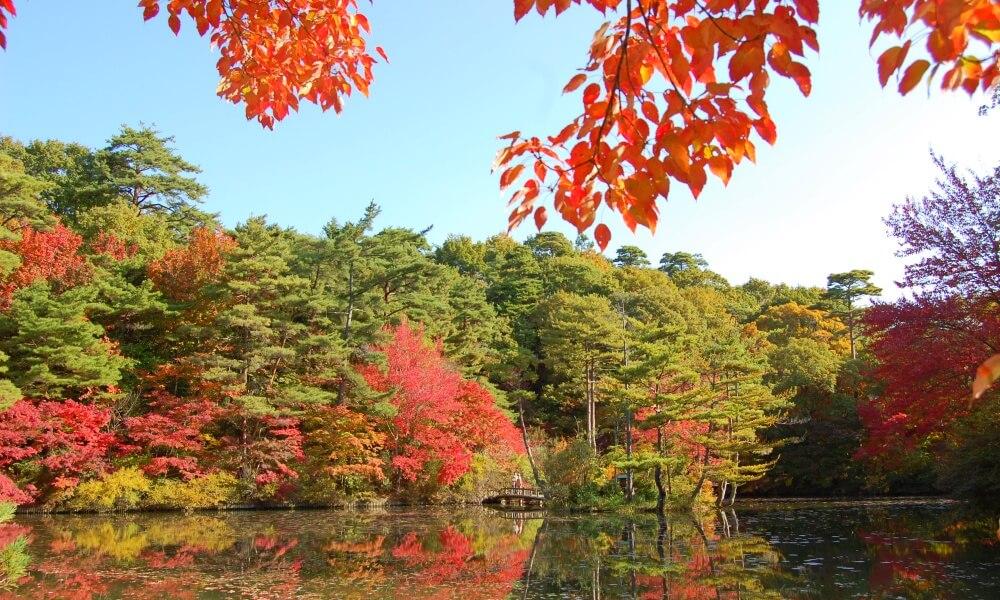 神戸市立森林植物園に咲いている植物