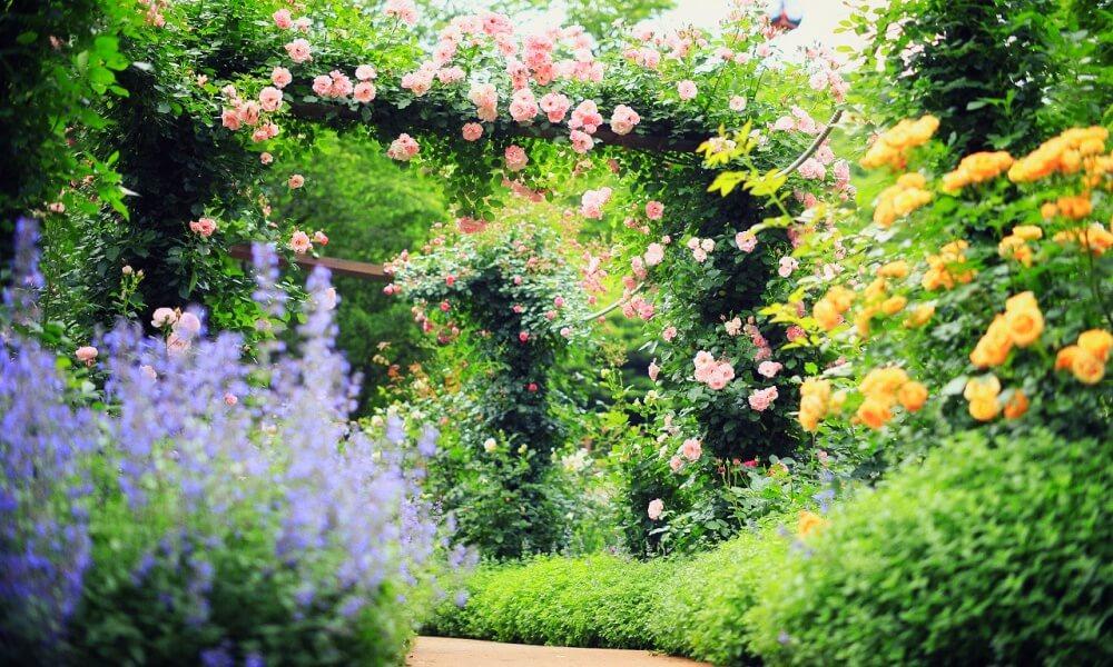 神戸布引ハーブ園のバラ