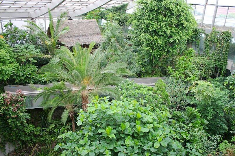 板橋区熱帯植物館