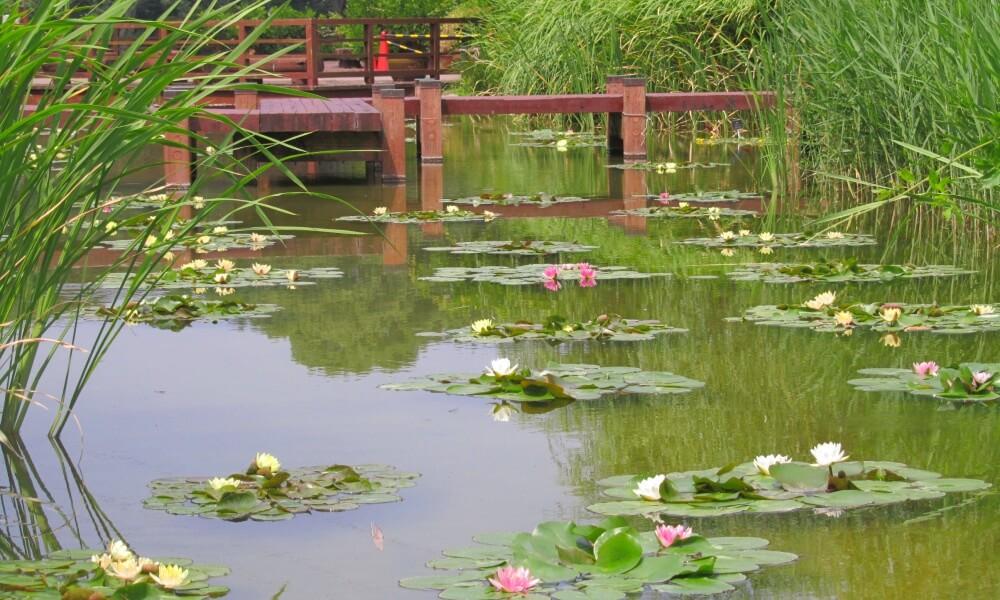 豊橋総合動植物公園に咲く植物