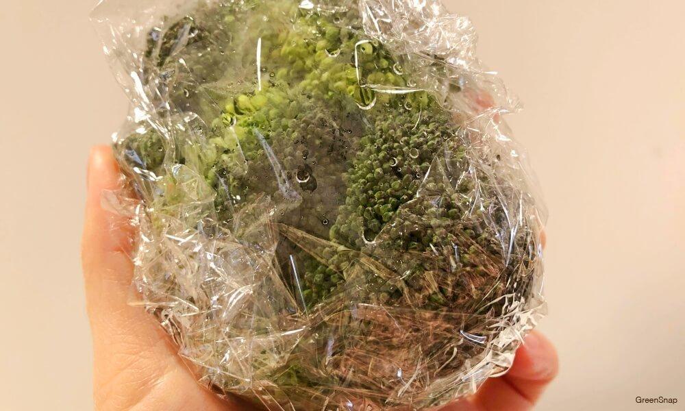 ブロッコリーの保存方法(サランラップで包む)