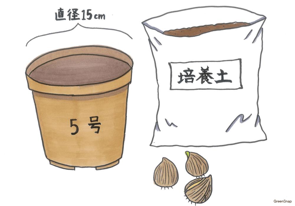 【チューリップの育て方】球根の植えつけに必要な道具