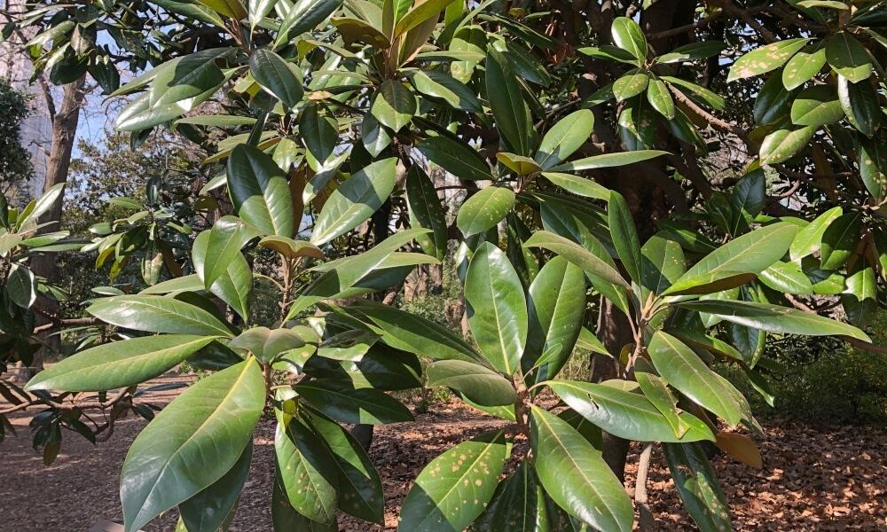 大山木の葉の画像