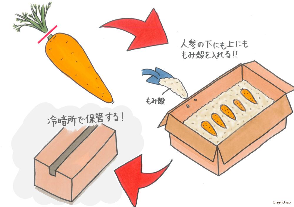 ニンジン にんじん 人参 保存方法