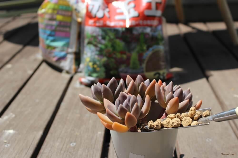 赤玉土を多肉植物の鉢に混ぜ合わせる様子