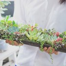 100均 hanaの植物あそび センペルビウム ハーブ プランター作り方,雨樋 ベランダガーデニング 多肉植物 簡単DIY