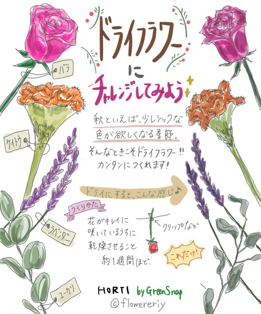意外な花材でもOK?オリジナルドライフラワーをつくってみよう!【#エリの花日記 〜vol.14〜】