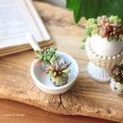 100均diy hanaの植物あそび 多肉植物 簡単DIY