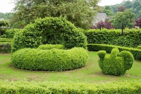 剪定 園芸 ガーデニング