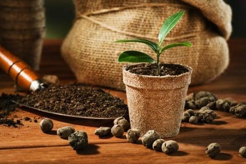 挿し木 鉢植え 植え替え