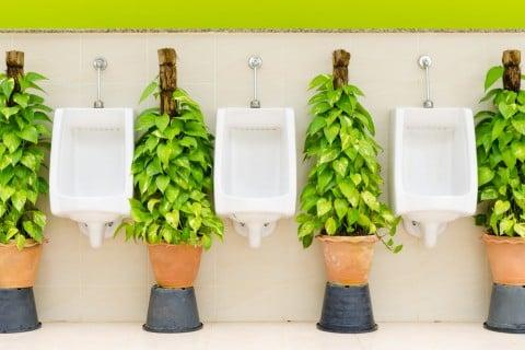 トイレ 観葉植物