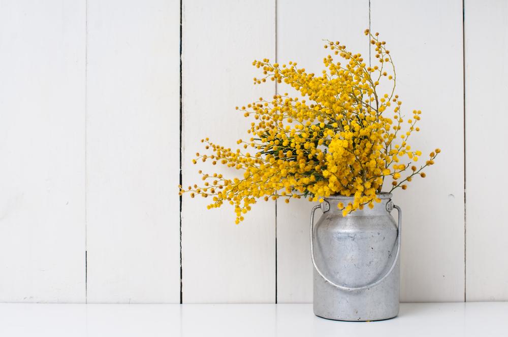 アカシア 花