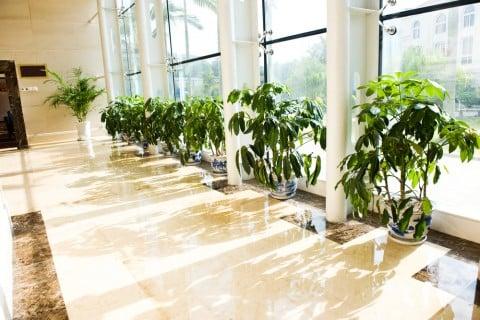 観葉植物 窓際