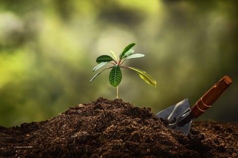 挿し木 苗 地植え