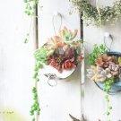hanaの植物あそび リメ缶