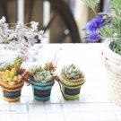 hanaの植物あそび リメ鉢