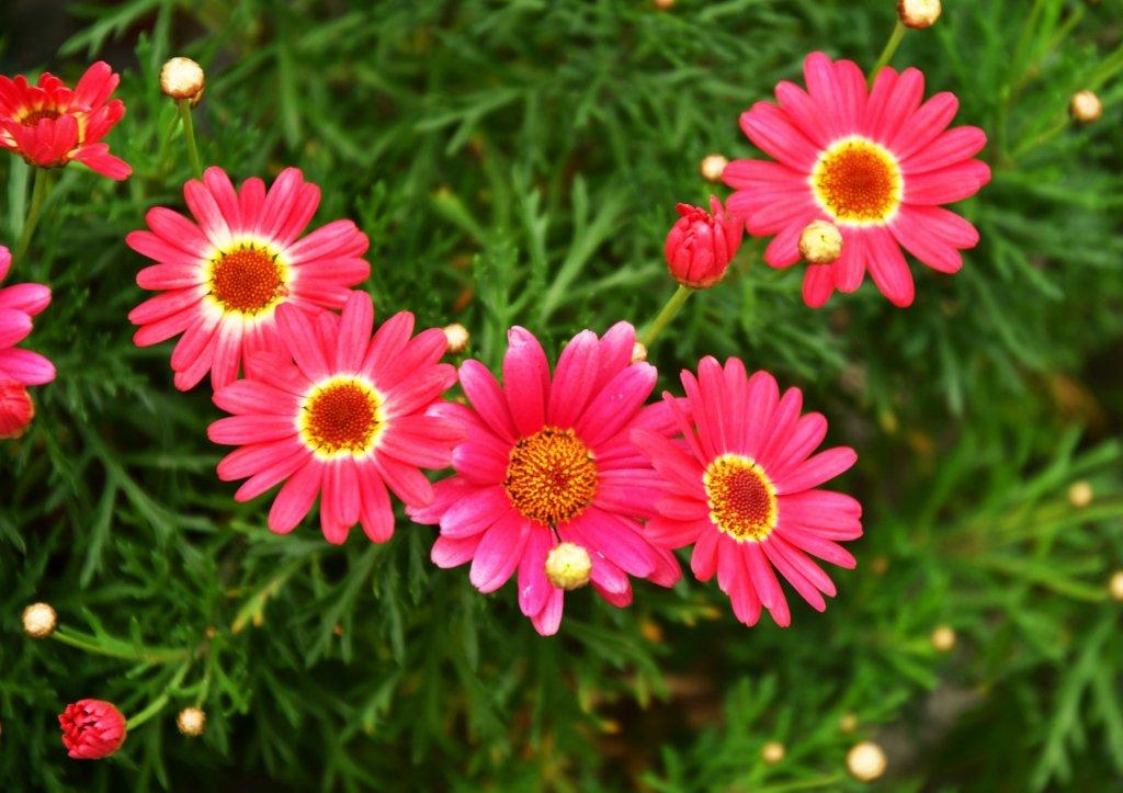 10月の誕生花|日別の花や花言葉まとめ - HORTI 〜ホルティ〜 by GreenSnap