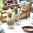 100円ショップ diy hanaの植物あそび サボテン