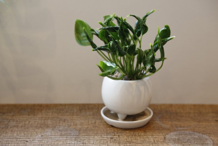 鉢いっぱいの観葉植物